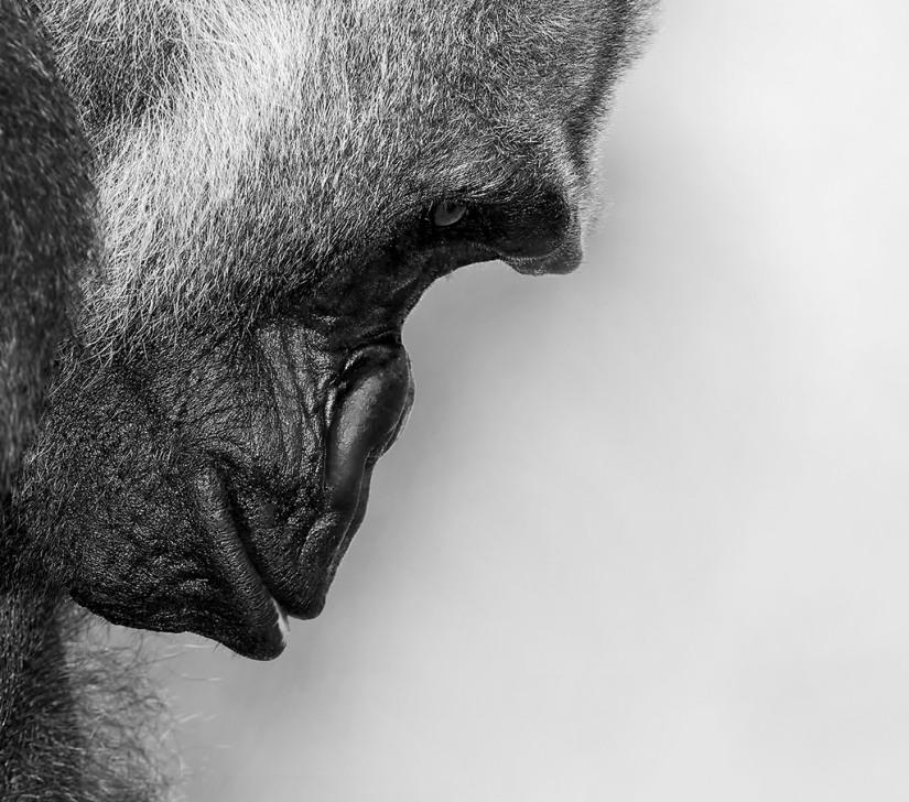 Six Heuristics For JudgingIntelligence